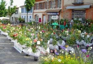 floralies cornebarrieu